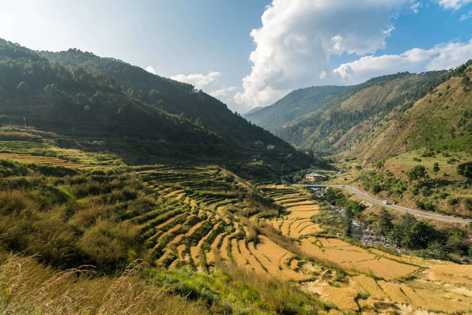 Rice paddies on the side of the highway in Punakha