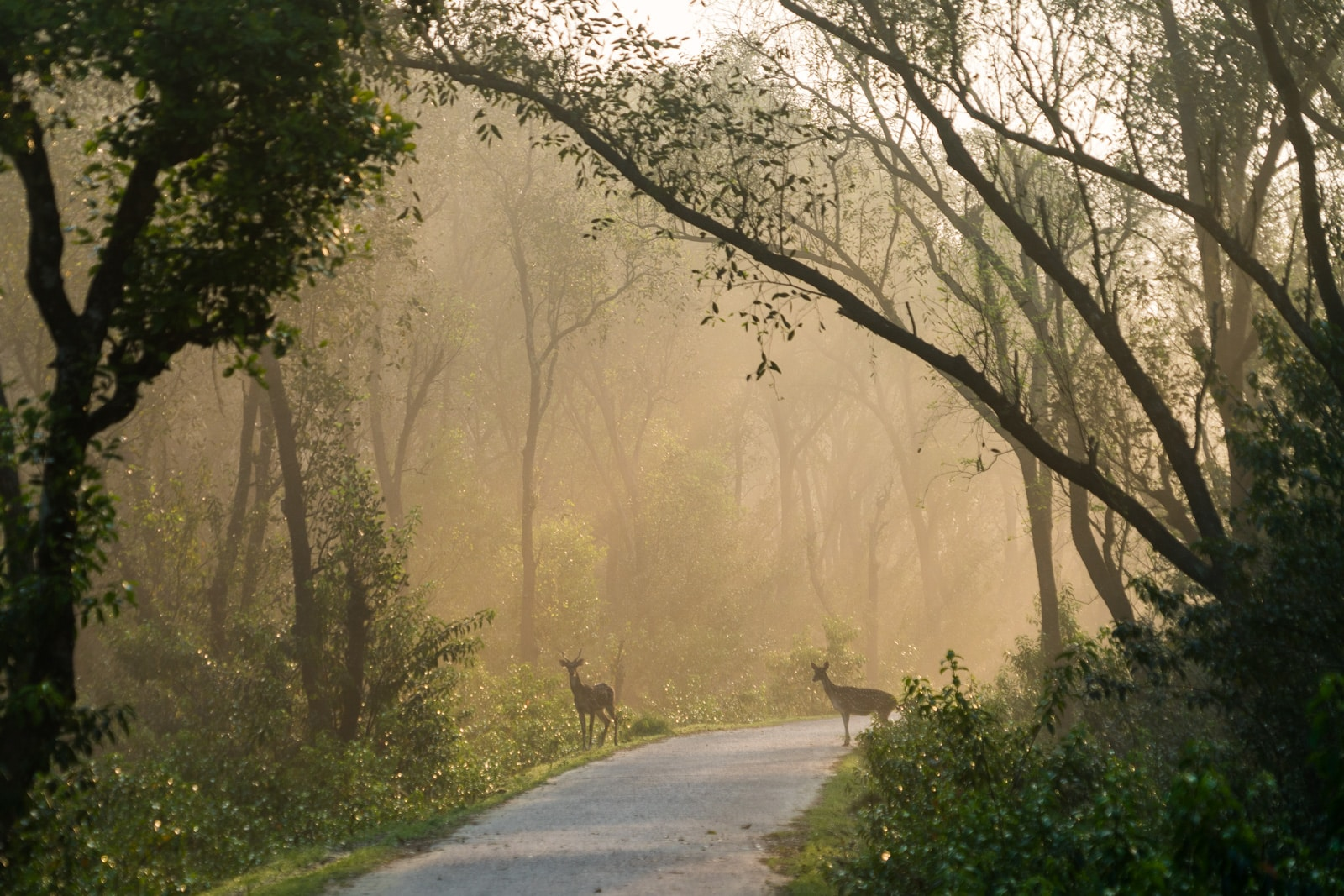 Travel guide to Nijhum Dwip, Bangladesh - Silhouettes of spotted deer crossing the road in early morning light - Lost With Purpose travel blog