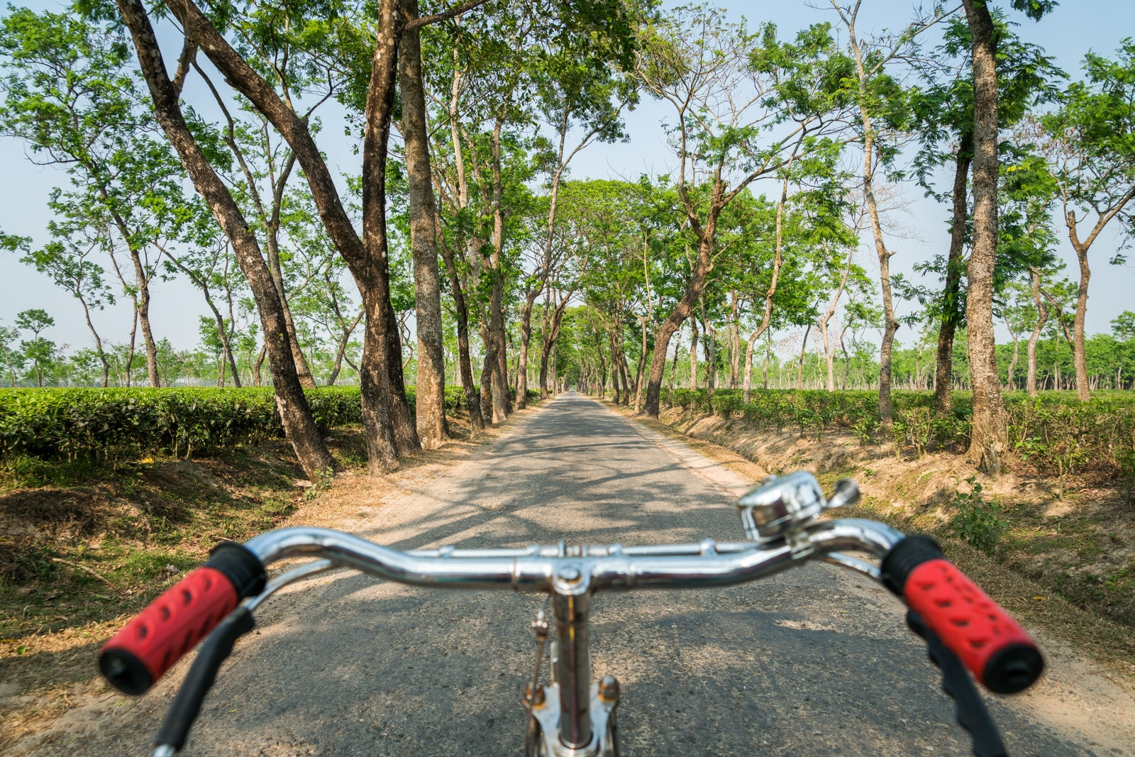 Backpacking in Bangladesh travel guide - Biking in tea plantations of Srimangal - Lost With Purpose travel blog