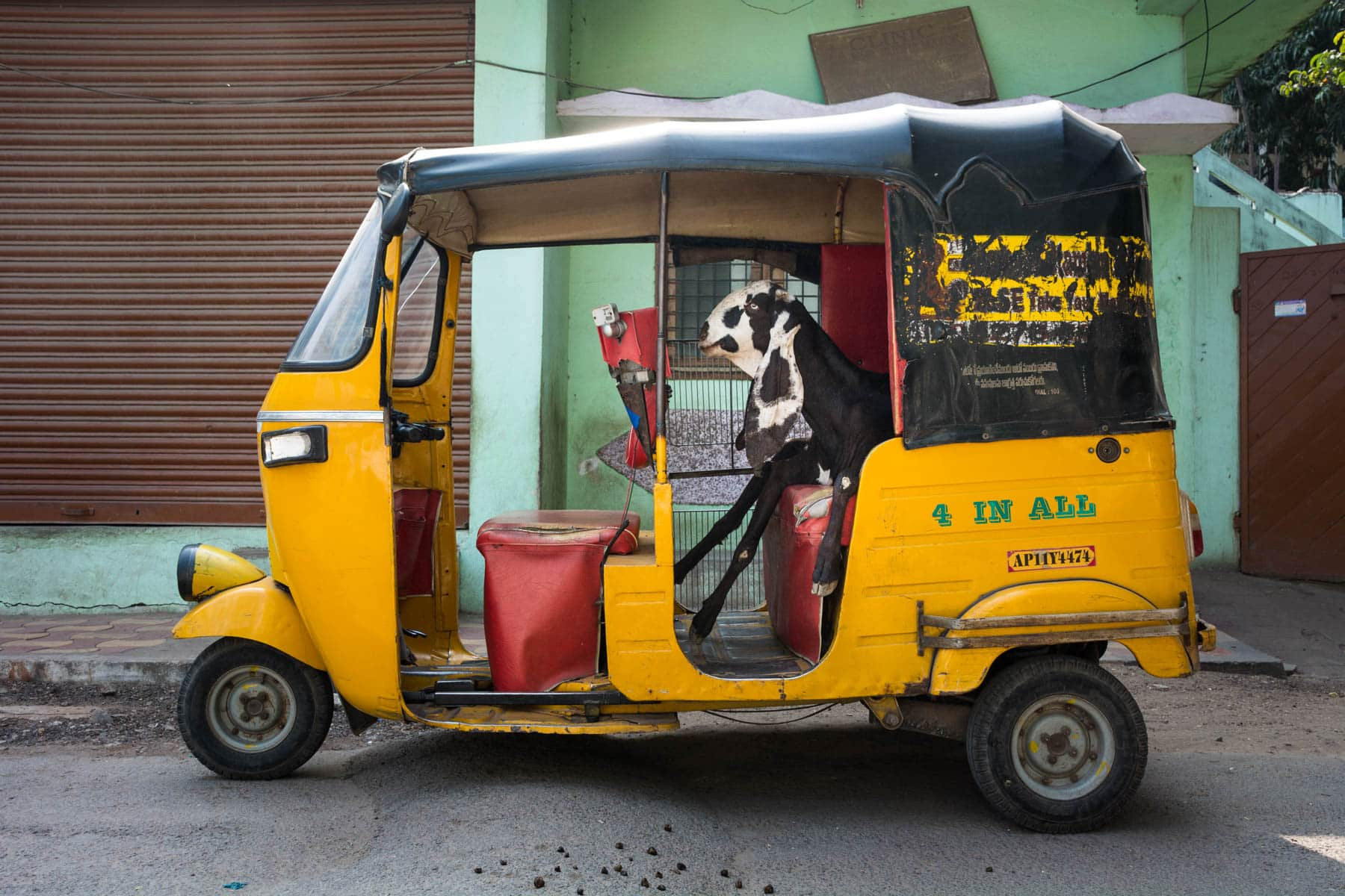 How to travel more responsibly - Goat sitting in an auto in Hyderabad, India - Lost With Purpose travel blog