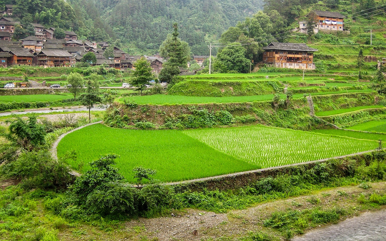 Exploring off the beaten track villages in Guizhou, China - Green rice paddies in Langde village