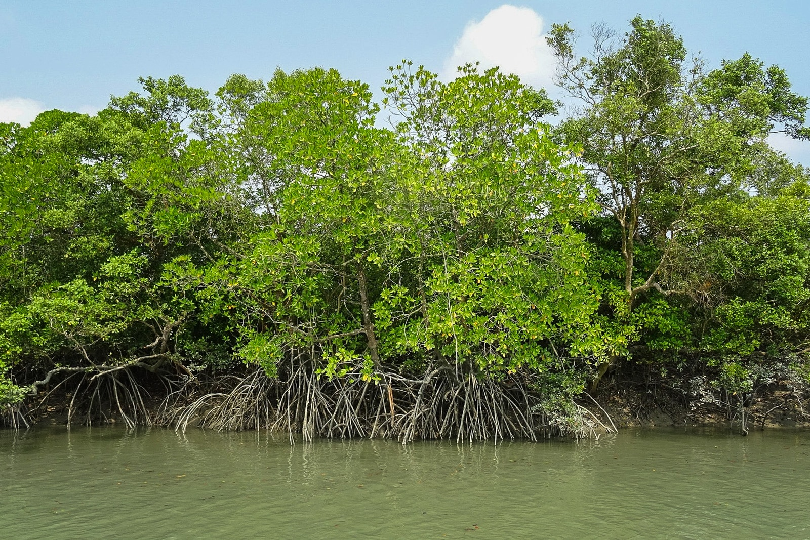 Backpacking Bangladesh travel guide - Sundarbans Mangroves from Pixabay