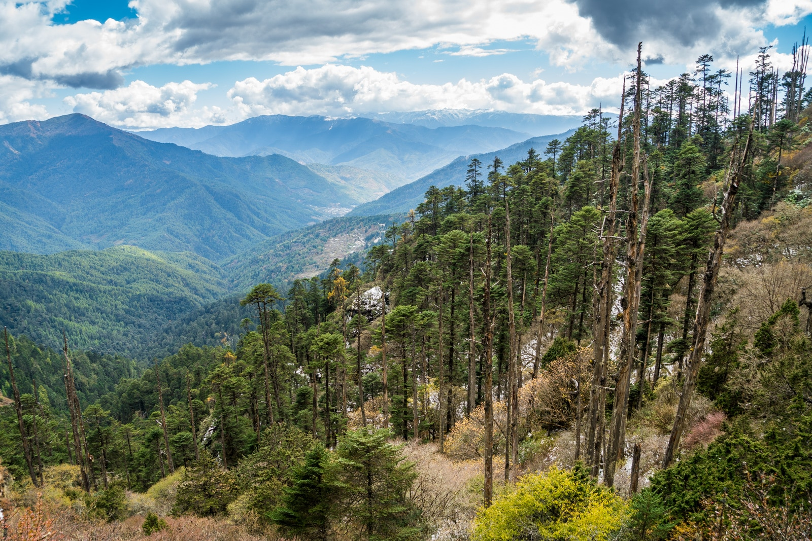 Photos of Bhutan - Trees along the Druk Path - Lost With Purpose travel blog