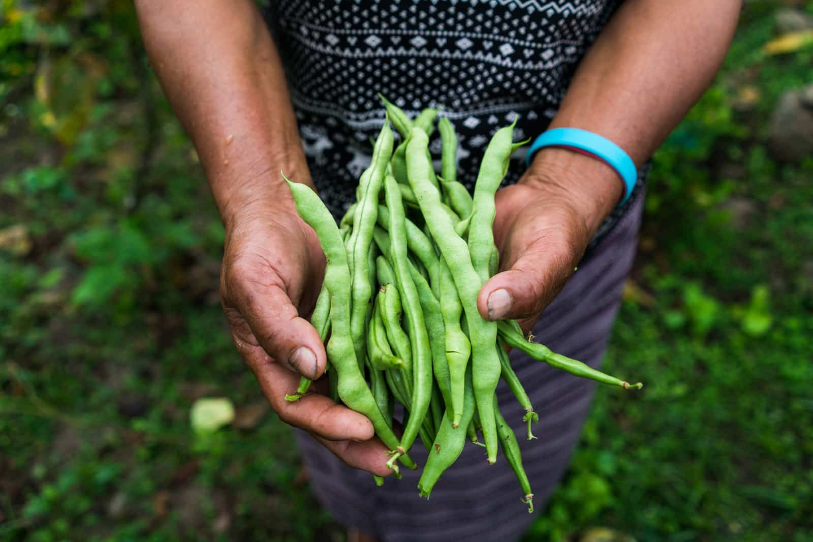 Stunning photos of Bhutan - Hand picked beans in Birtii village, Zhemgang district - Lost With Purpose travel blog