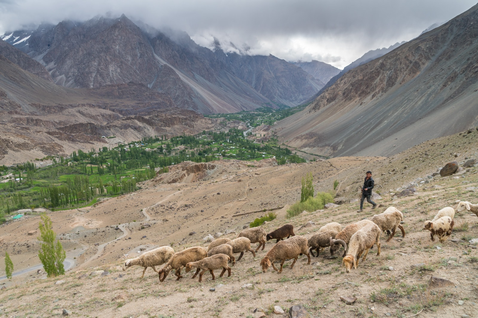 Phander Valley travel guide - Young shepherd and his flock - Lost With Purpose travel blog