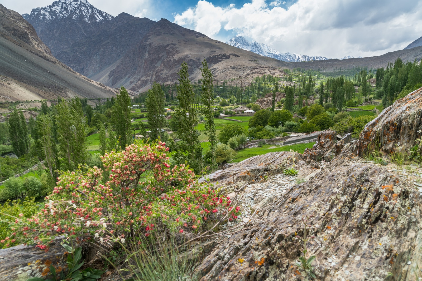 Phander Valley travel guide - Wildflowers on a hill overlooking the village - Lost With Purpose travel blog