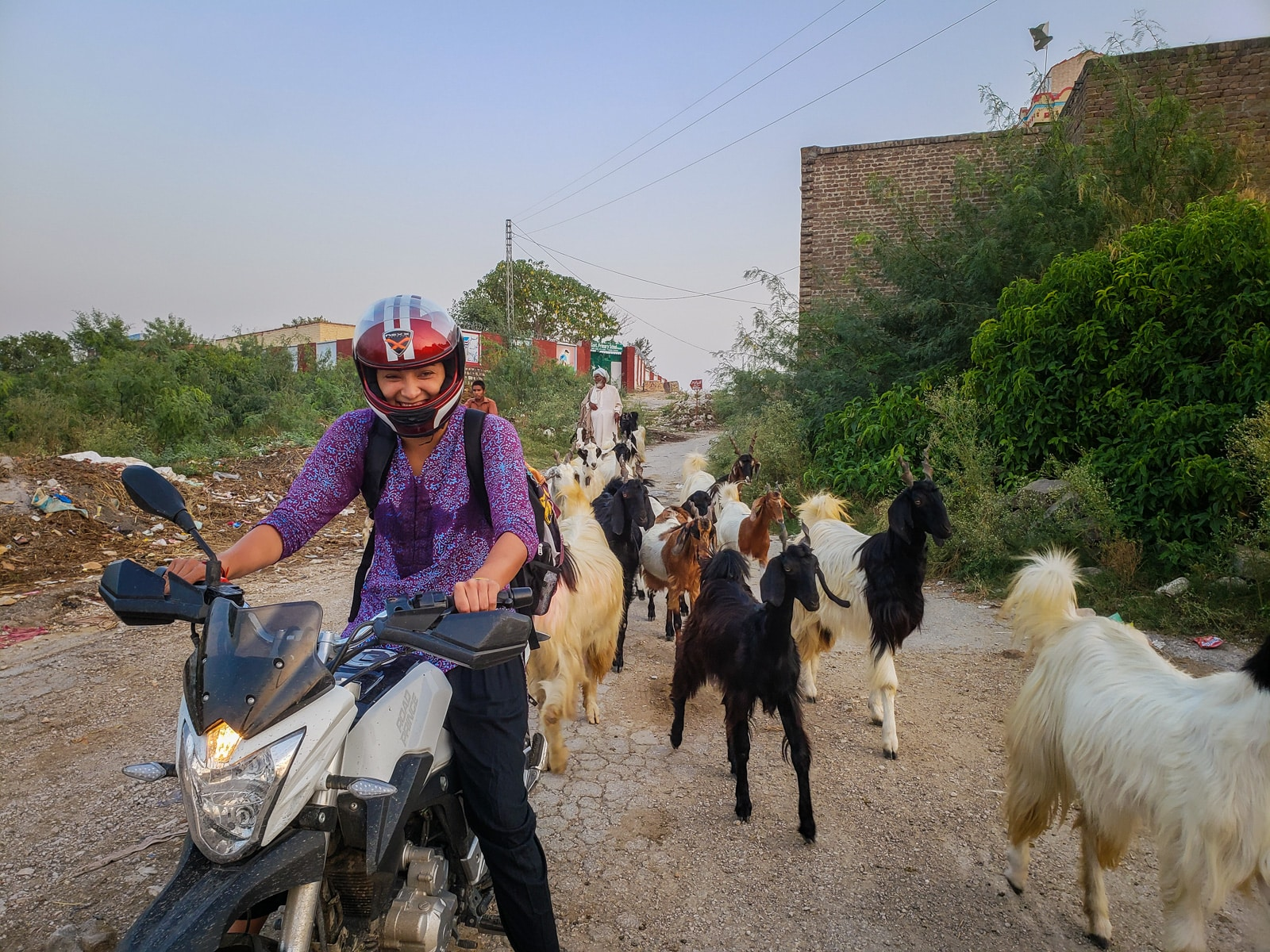 Motorbiking as a woman in Pakistan - Goats surrounding motorbike - Lost With Purpose travel blog
