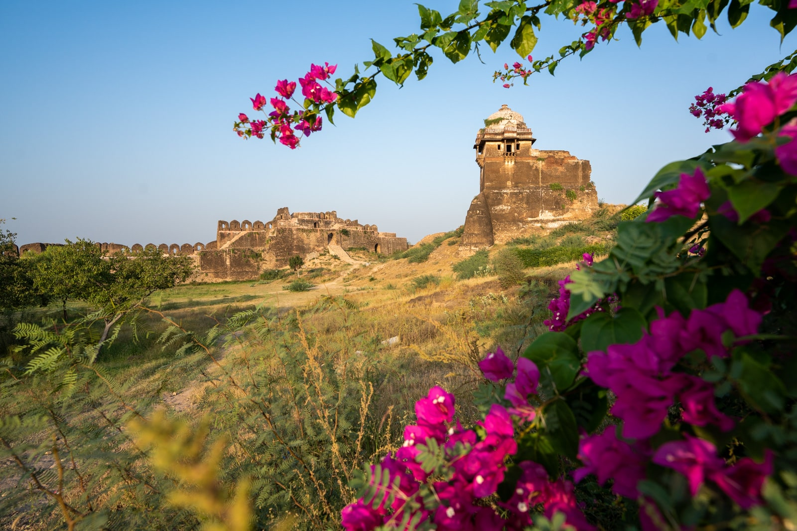 Reflections - Rohtas Fort in Pakistan at sunrise with magenta flowers - Lost With Purpose travel blog