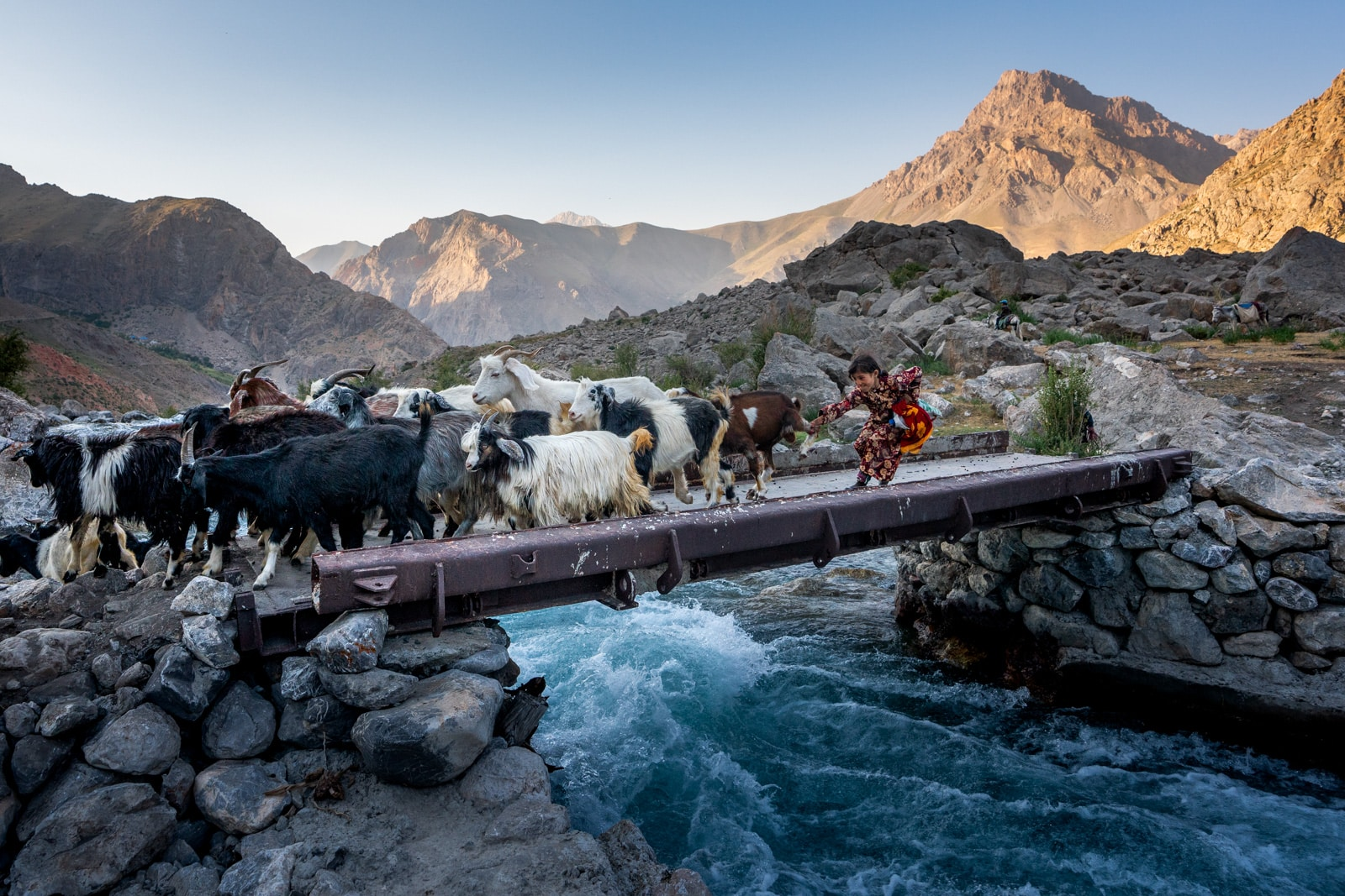 Girl catching escaping goat in Tajikistan's Fann Mountains