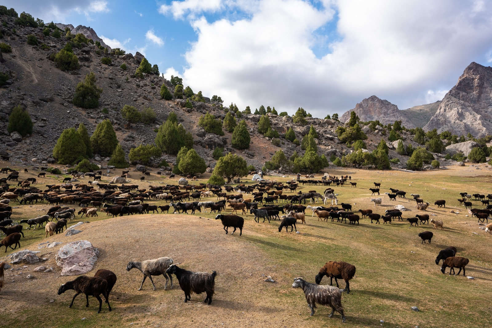 Herd of sheep and goats in Tajikistan