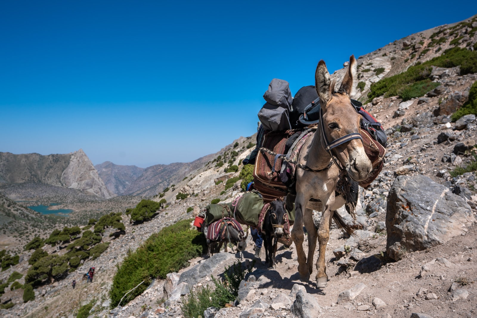 Donkeys carrying trekking gear through Western Tajikistan's Fann Mountains