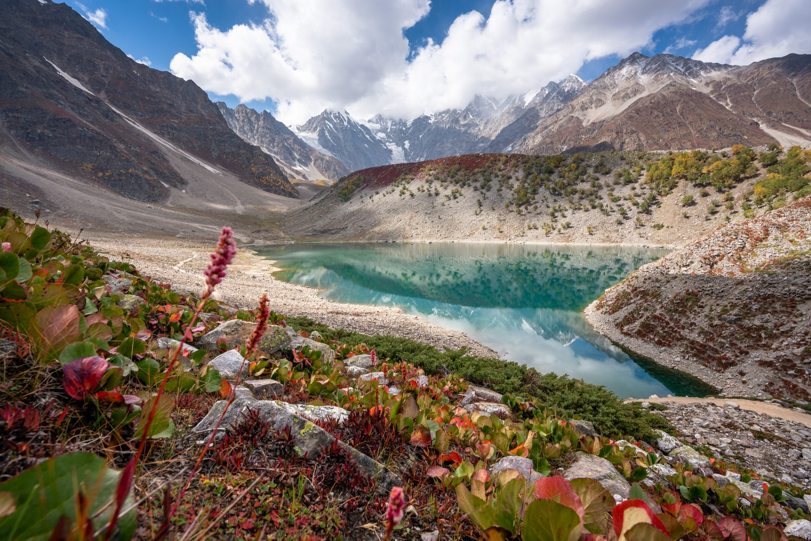 Wild flowers by Rama Lake in Astore, Pakistan
