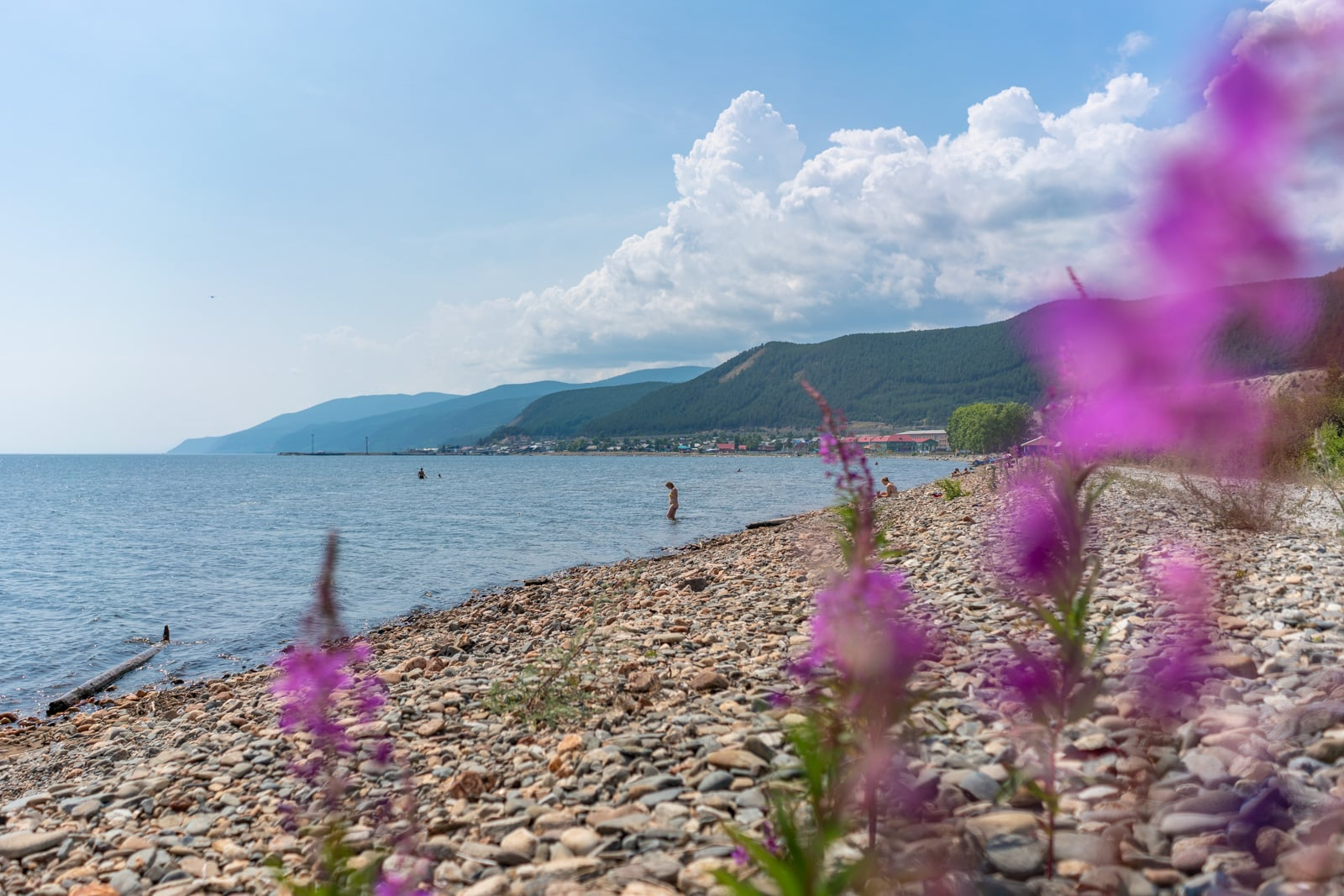 Flowers on the shore of northern Lake Baikal near Severobaikalsk, Siberia, Russia
