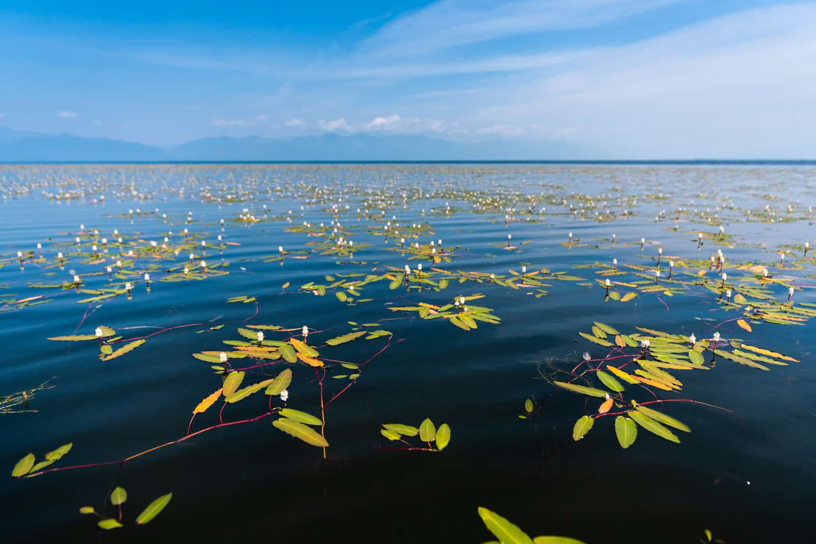 Water plants in North Lake Baikal, Siberia, Russia
