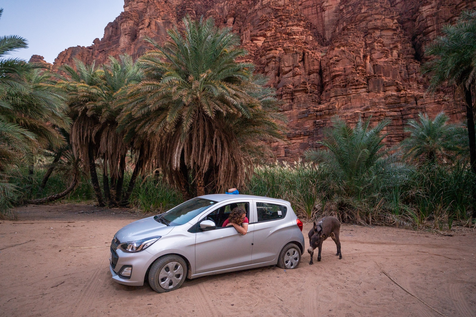 Donkey by rental car in Wadi Disah, Saudi Arabia
