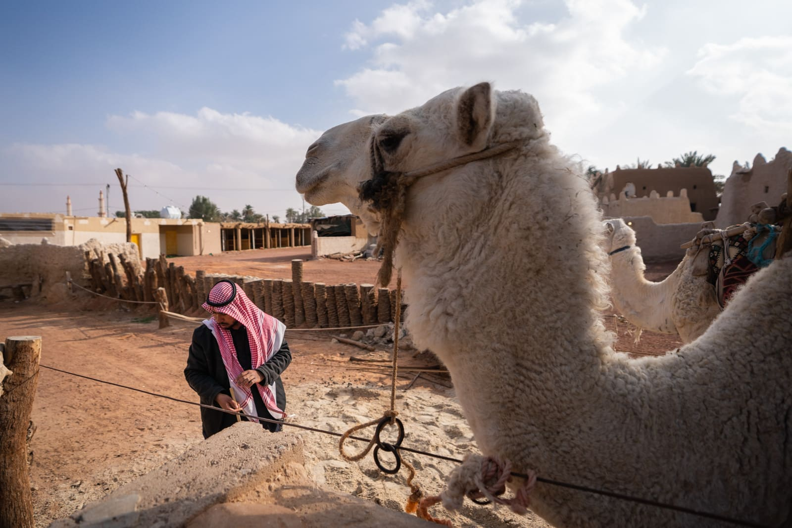 Camels at a well in Jubbah, Saudi Arabia