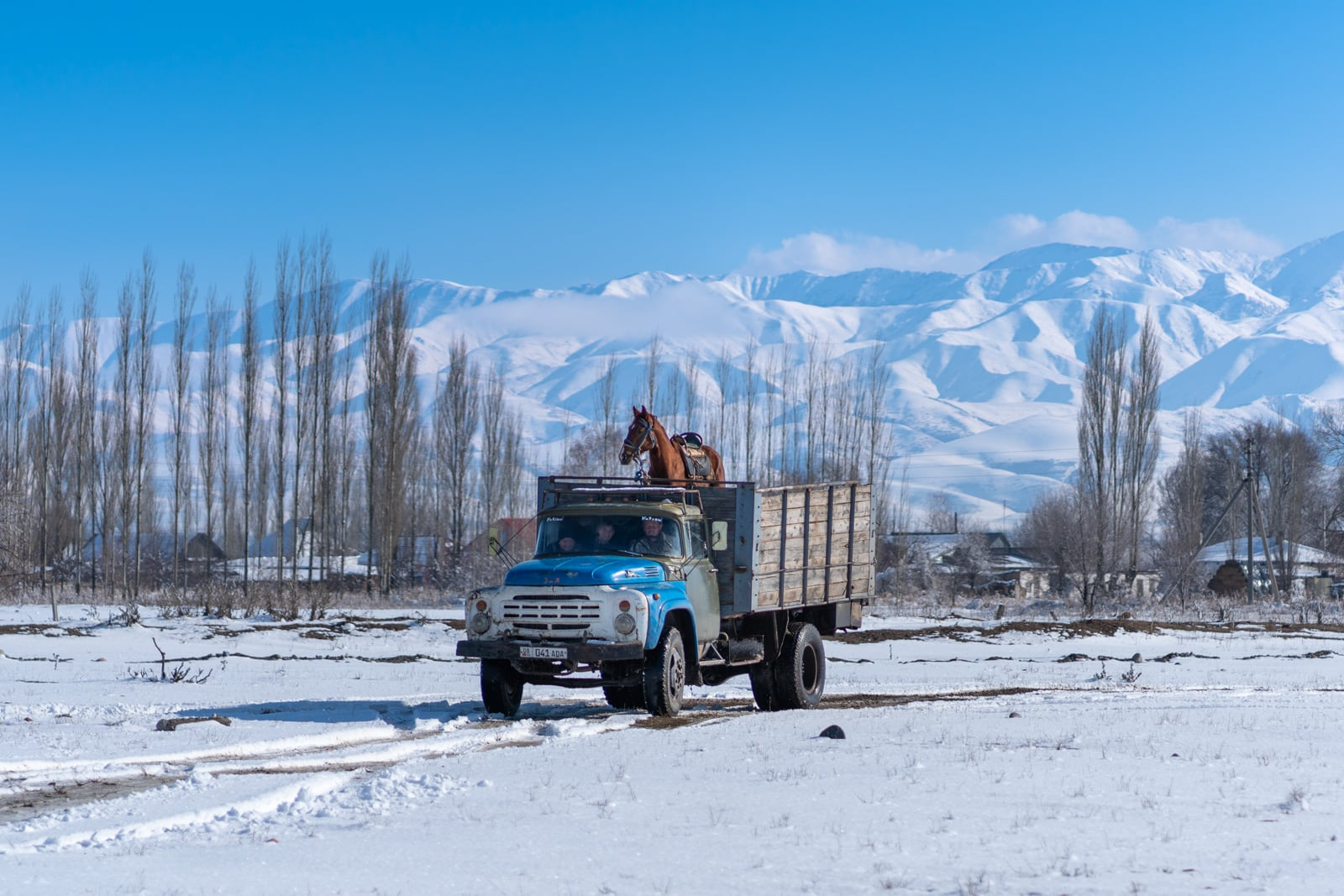 Horse transported in a truck in Kyrgyzstan