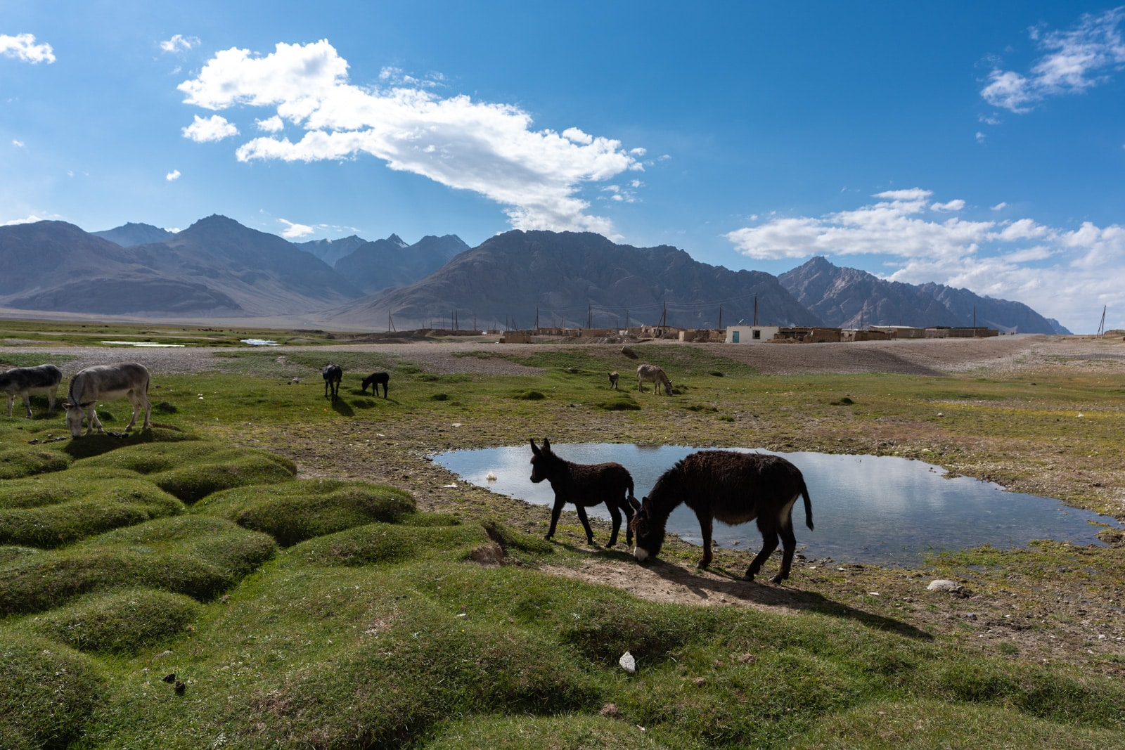 Donkeys in Shaimak
