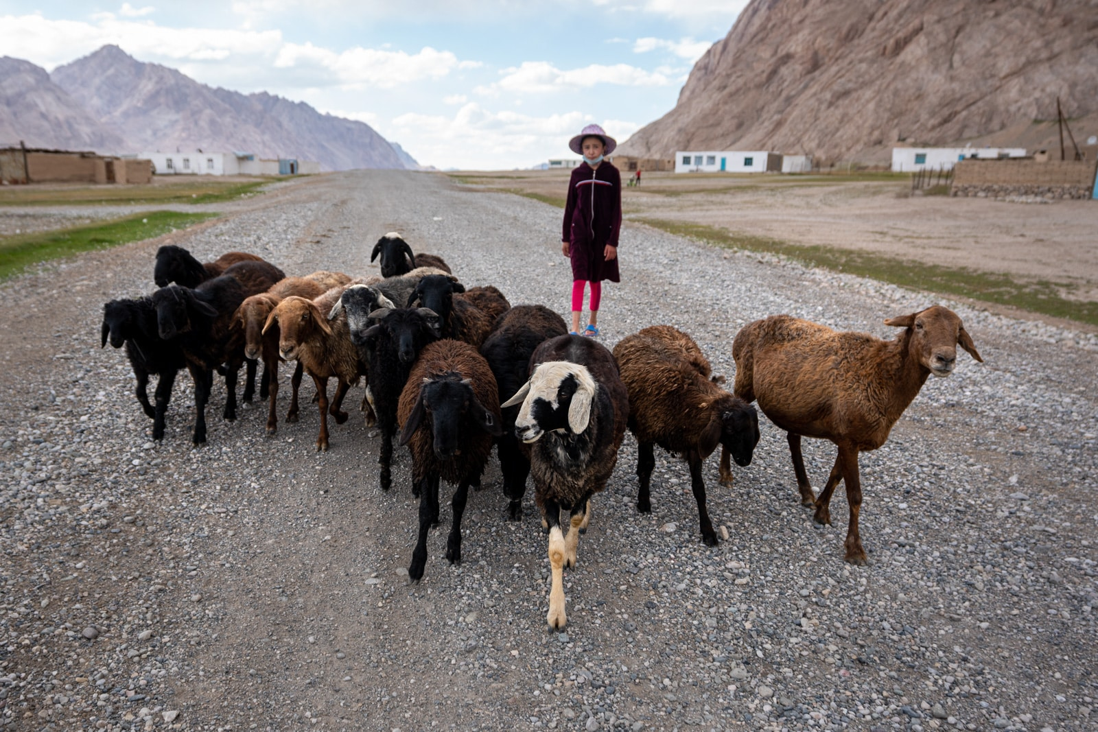 Sheep herding with homestay host in Shaimak, Tajikistan