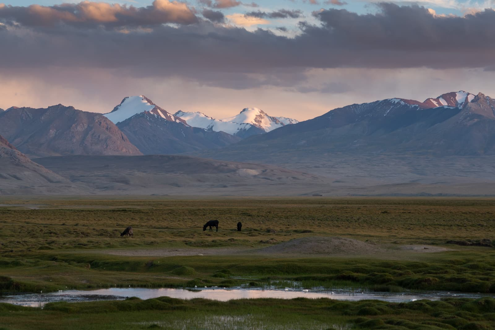Horses grazing during sunset over Shaimak
