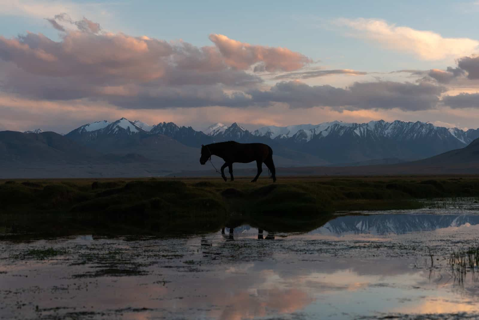 Horse in Shaimak at sunset