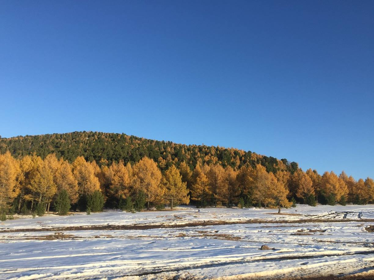 Fall colors in Mongolia